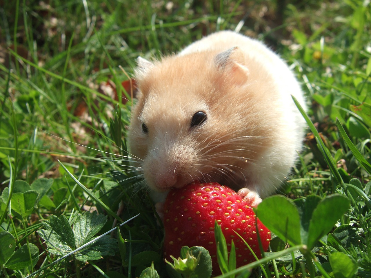 Hamster wheel syndrome - do you suffer from it? - Blue Pea POD